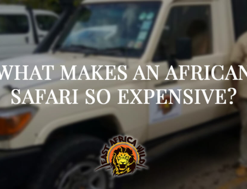 What Makes an African Safari So Expensive?