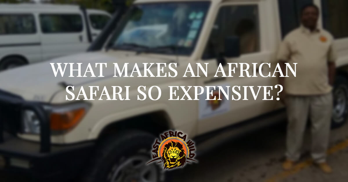 What-Makes An African Safari So Expensive | Africa Safari Cost