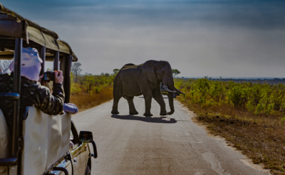 South Africa - East Africa Wild Luxury Safari Destination