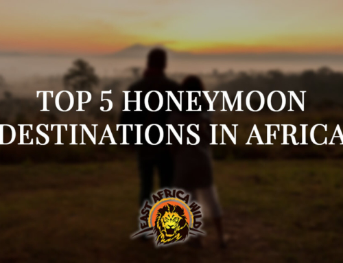 Top Five Honeymoon Destinations in East Africa