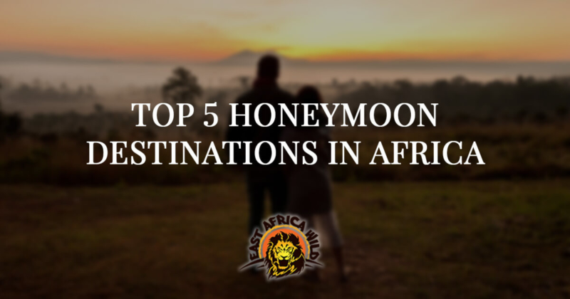 Top Five Honeymoon Destinations in Africa