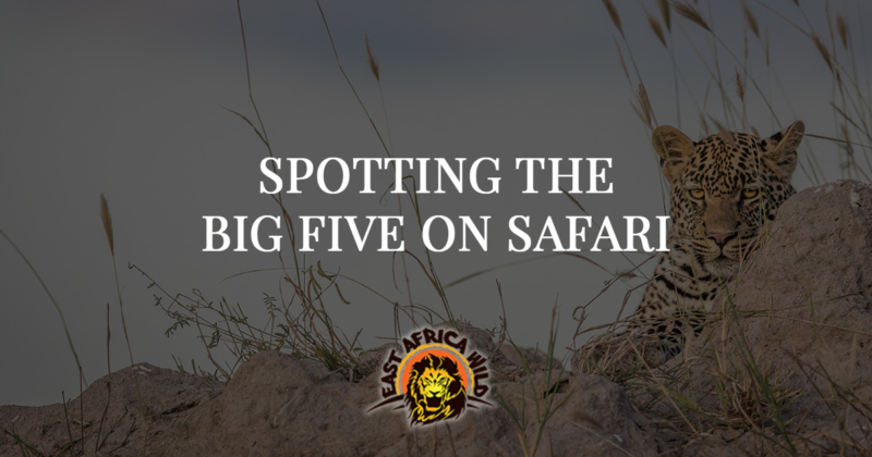 Spotting The Big Five On An African Safari