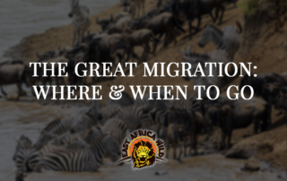 African Great Migration | Where and When to Go
