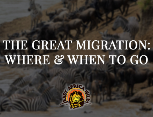 African Great Migration: Where and When to Go