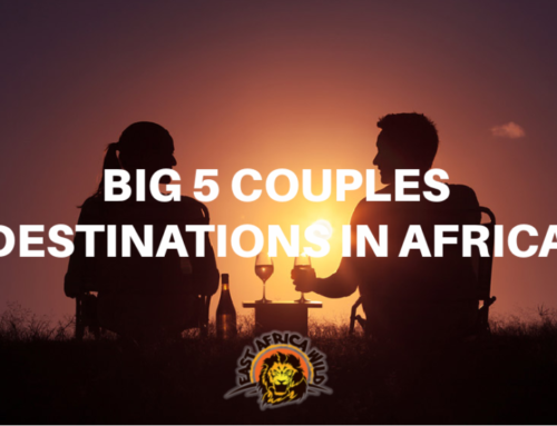 Big 5 Destinations For Couples In Africa